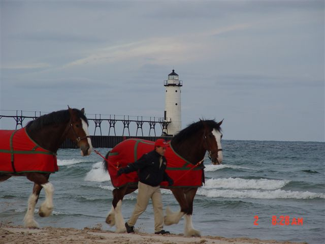 Budweiser Clydesdale's being waked on the beach at Fifth Avenue with the lighthouse in the background in 2004